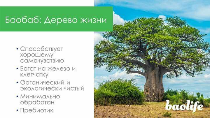 Баобаб, дерево жизни, способствует хорошему самочувствию, богат на железо и клетчатку, органический и экологически чистый, минимально обработан, пребиотик, baolife комплексная пищевая добавка. Picture