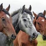 Рейтинг лучших репеллентов для лошадей на 2021 год