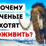 my mozhem uvidet zhivyh mamontov